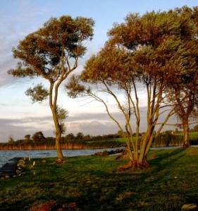 Friesisch-herbe Landschaft mit Bäumen und Wasser