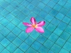flower floating in a pool